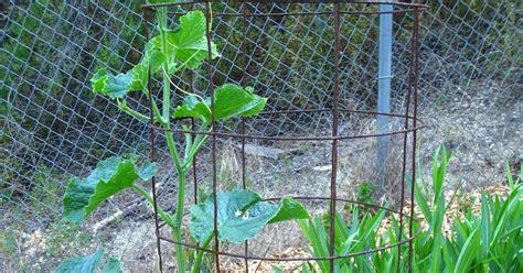 Low Cost Vegetable Garden: Hugelkultur works, a comparison