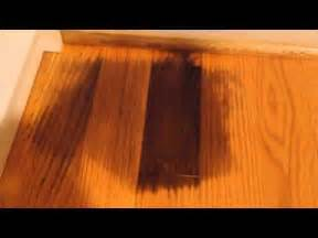 Hardwood Floor Stains - remove pet urine on hardwood floor youtube