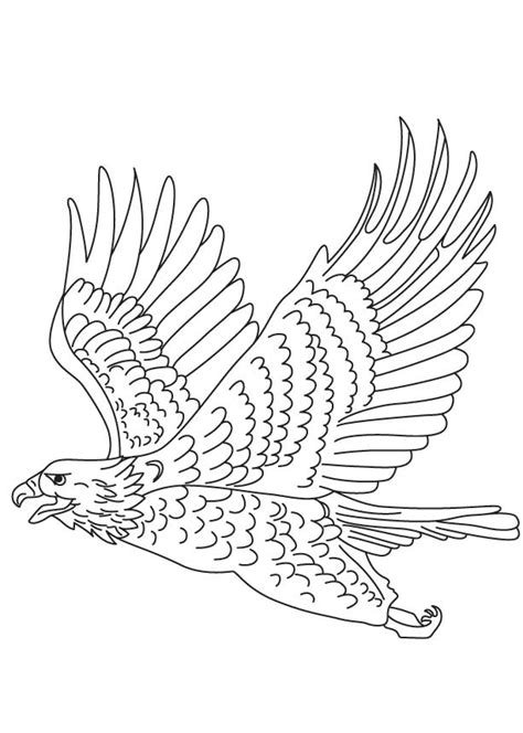 eagle wings coloring page eagle coloring page coloring home