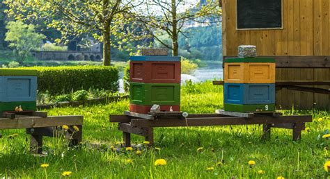bees in backyard make your own honey with backyard beekeeping greener ideal