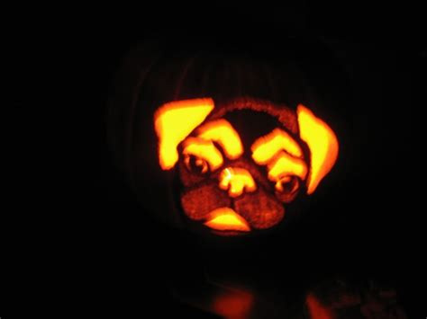 pug pumpkin stencil 20 best images about pumpkin templates on pumpkin carvings
