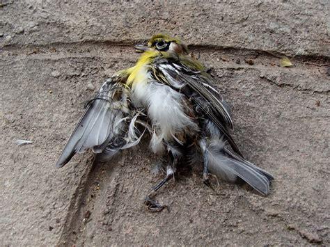 Dead Bird On Front Porch yvonne mullock