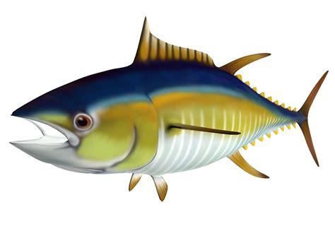 clipart graphics tuna clipart clipground