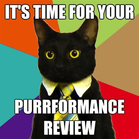 Business Cat Meme - 301 moved permanently