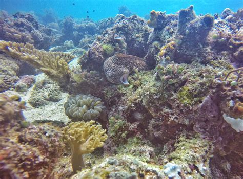 dive mabul diving and staying at scuba junkie resort mabul our