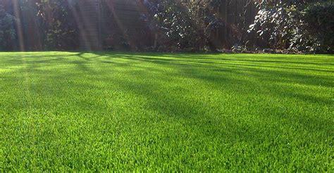 artificial grass to the rescue artificial lawn company