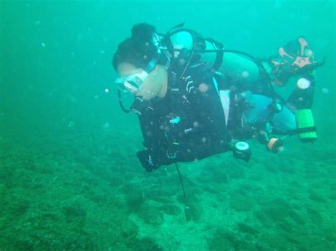 dive nere 11 picture of rocket frog divers playa ocotal tripadvisor