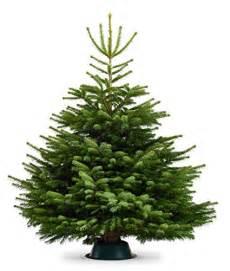 echter weihnachtsbaum nordmanntanne frisch geschlagen