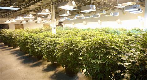 marijuana stocks   triple  legalized pot
