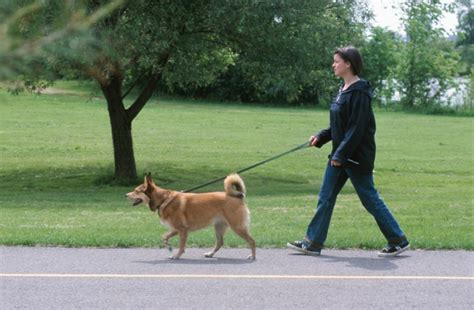 walking a puppy the benefits of walking your the dogington post