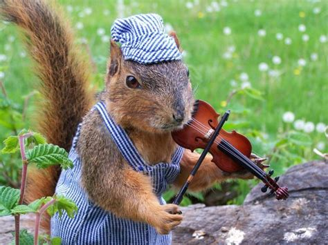 let me see you do the squirrel below are just a few exles of the weird records that