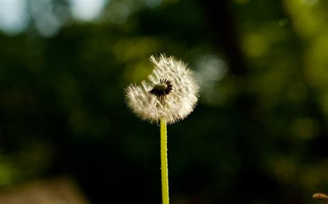 sun shines beautiful flowers walpapers