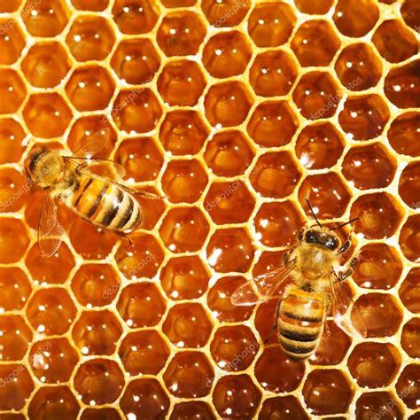 Trabalho de abelhas no favo de mel — Fotografias de Stock