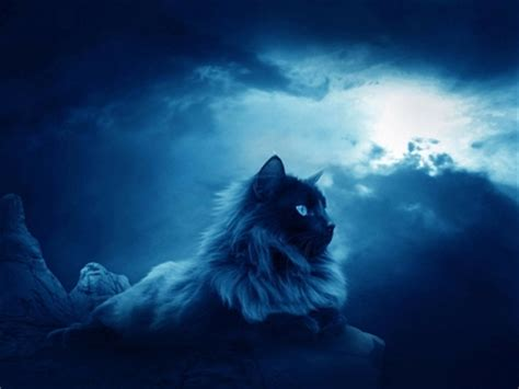 wallpaper cat night clouds night cats 1600x1200 wallpaper high quality