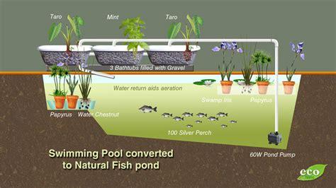 converting  swimming pool  grow fish