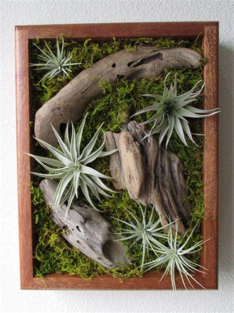 tillandsia living wall air plant wall art