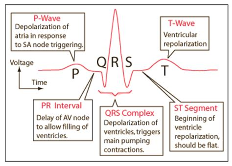 Ecg Pattern Meaning | electrocardiograms