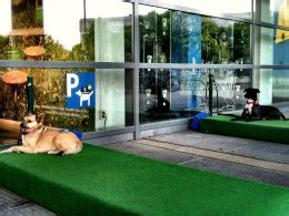 ikea dog parking is your dog ready for the dog park or should you steer