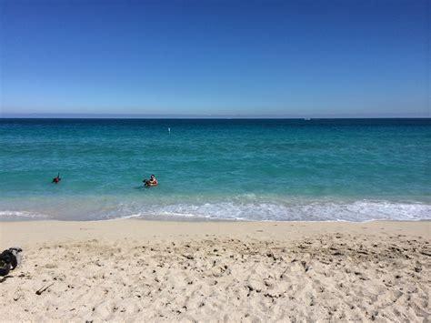 Poringueras En Las Playas | haulover beach una playa dog friendly en miami 4 travellers