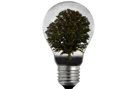 bulb light with tree free stock photo public domain pictures