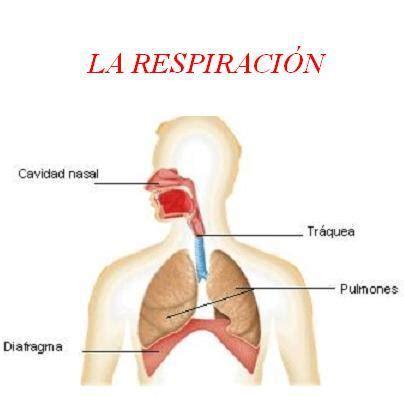 imagenes de respiracion yoga la respiraci 243 n esenza pilates