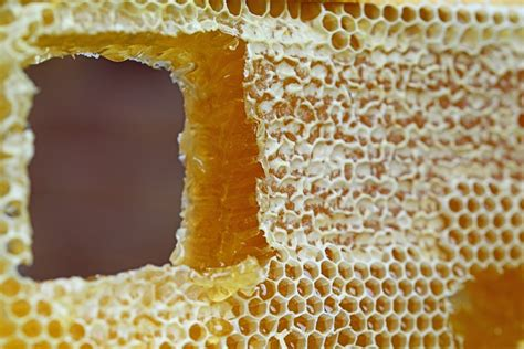 Madu Sarang Honey Comb free photo honeycomb comb honey wax cells free image