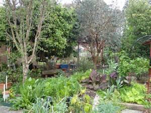 backyard permaculture australia 100 backyard permaculture australia our permaculture life learn with morag