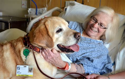 comfort pets palomar paws pet therapy palomar health san diego