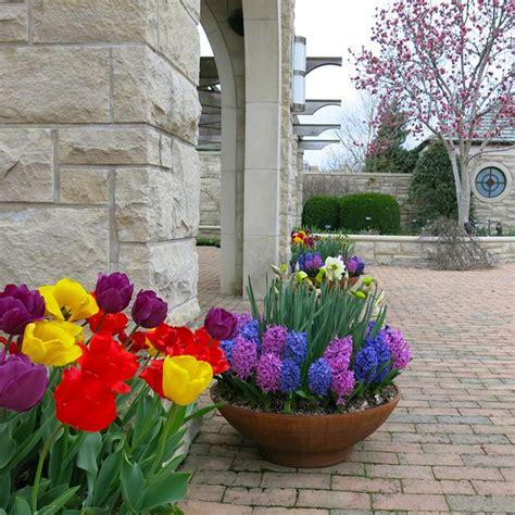 Bulb Garden Ideas Midwest Gardening Annuals And Bulbs Line The Path To