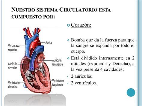 el corazn de los sistemas del cuerpo humano
