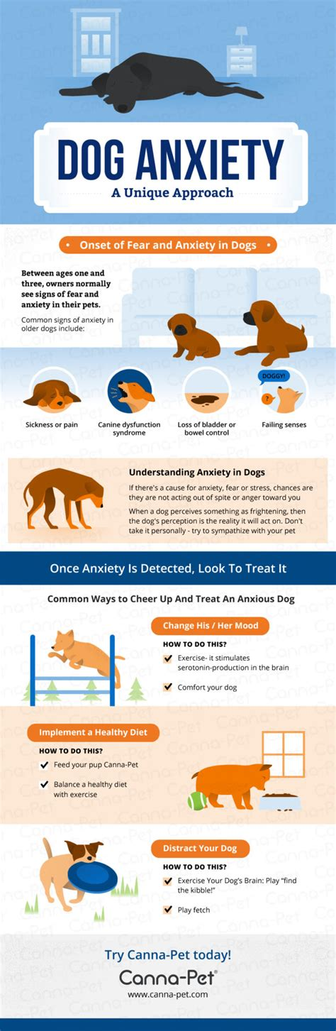 how to treat anxiety in dogs anxiety remedies a complete guide canna pet 174