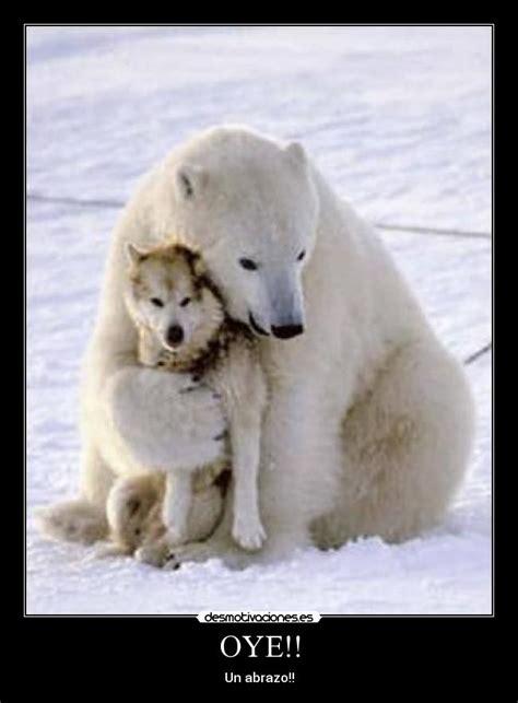 imagenes de lobos llorando im 225 genes y carteles de siberiano pag 5 desmotivaciones