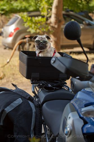 pug motorcycle motorcycle pug 4 flickr photo