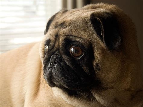 blindness in dogs living with blind dogs petfinder