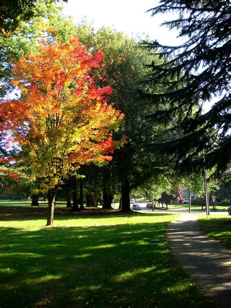 College Trees - panoramio photo of reed college colorful tree