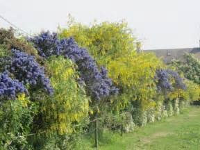la haie fleurie les jardins par th 232 me