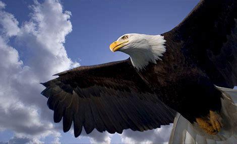 imagenes en 3d de animales salvajes paisajes de ensue 241 o paisajes con animales