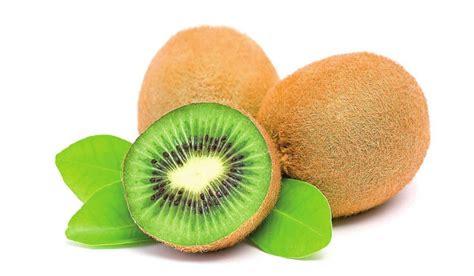 imagenes de memes de kiwi kiwi la fruta m 225 s completa edicion impresa abc color
