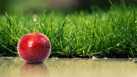 apple wallpapers real wallpaper nature animal hd 3d beauty full size widescreen