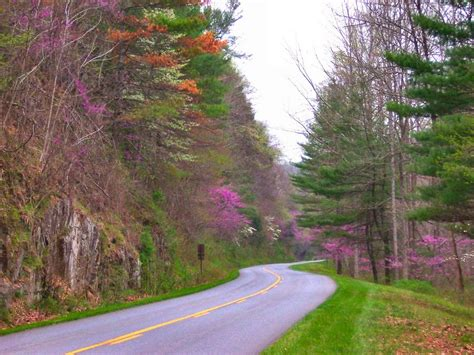 blue ridge parkway blue ridge gazette spring on the blue ridge parkway
