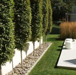 trees for small backyards 10 best ideas about privacy trees on privacy