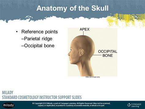 occipitsl bone do with hritcutting chapter 16 haircutting note this chapter of the