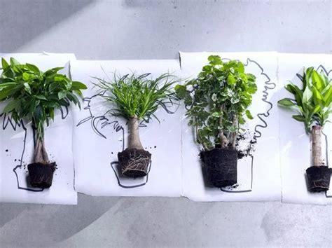 les plantes d int 233 rieur s invitent dans notre d 233 coration