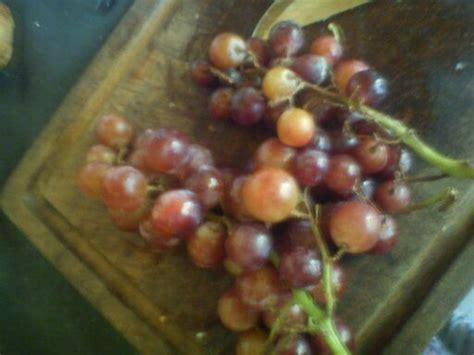 imagenes de los uvas kangris ensalada de frutas con fotos taringa