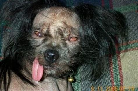ugliest puppy 20 ugliest dogs damn cool pictures