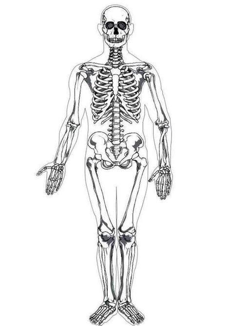 anatomy coloring pages skeleton photo human skeleton in human anatomy coloring pages