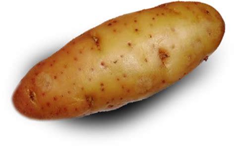 colorado potato