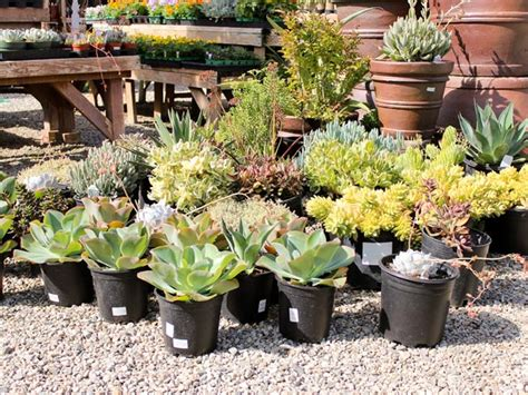 earth day sale succulents roses and more