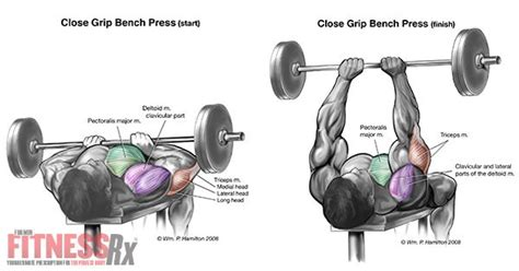 close grip barbell bench performing the close grip bench press triceps bench