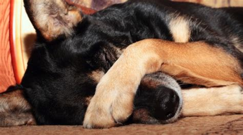 puppy motion sickness motion sickness in dogs what to do housemydog